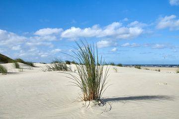 Helmgras am Strand von Ameland von Ad Jekel