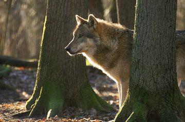 Wolf in Erwartung von Tanja Riedel