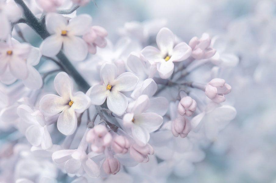 Lilacs van Violetta Honkisz