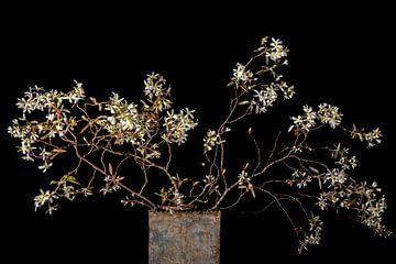 bloesem van het krentenboompje van Hanneke Luit