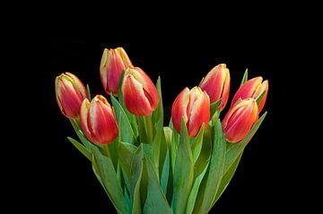 Tulipes d'Amsterdam sur Toon van den Einde