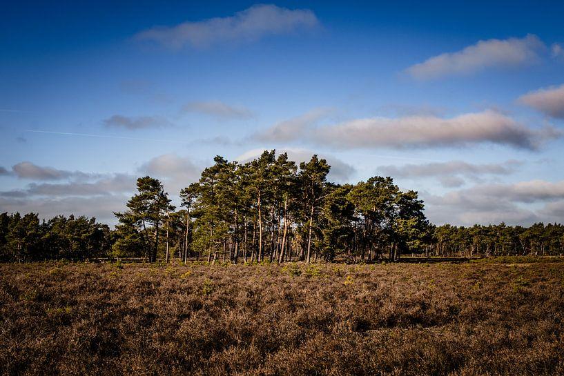 Bomen op de heide van Linsey Aandewiel-Marijnen