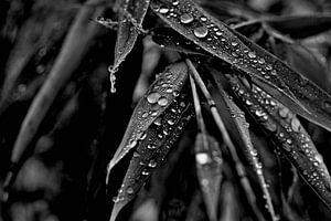 Wassertropfen auf Bambus