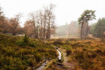 Herfst op de Noorderheide van Jenco van Zalk