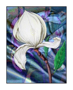 Troisième Magnolia van