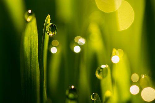 Waterdruppels op groene grassprieten van Paul Wendels