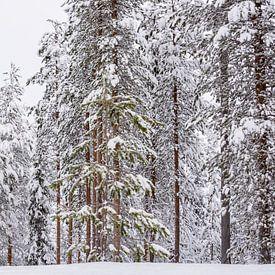 Panorama besneeuwde hoge bomen in Finland van Rietje Bulthuis