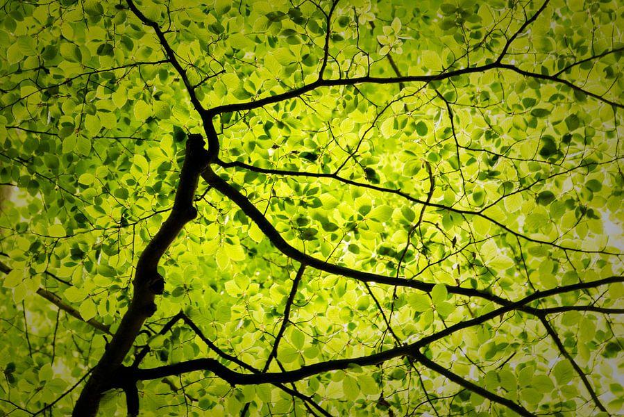 De aderen van het bos