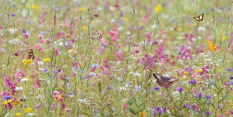 Bloemenveld met vlinders van Martin Bergsma