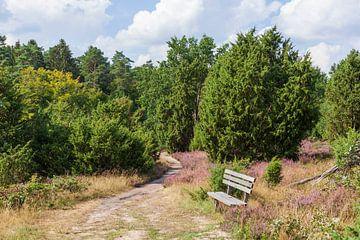 Heidelandschaft, Heiedeblüte, Steingrund, Niederhaverbeck