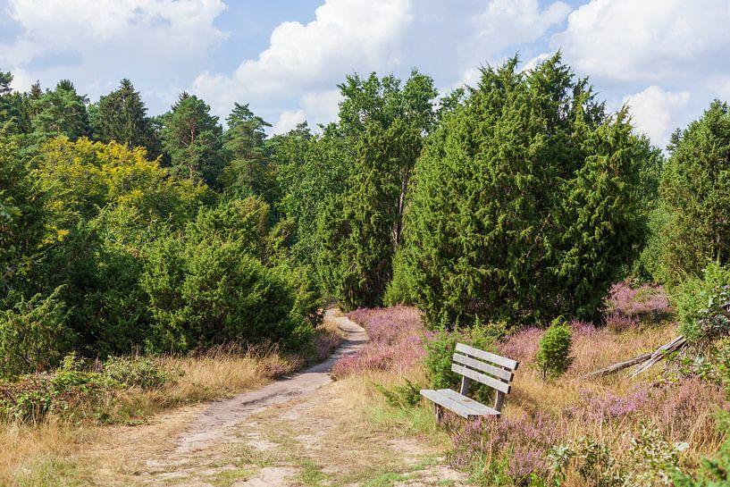 Heidelandschaft, Heiedeblüte, Steingrund, Niederhaverbeck von Torsten Krüger