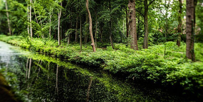 Natuurfoto van een Hollands park met oude bomen en slootjes van MICHEL WETTSTEIN