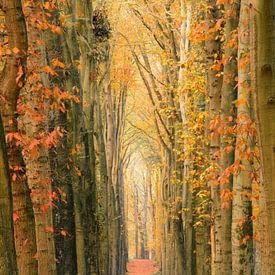 A wall of trees van Max ter Burg Fotografie