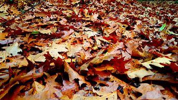 Herfst van Jan-Julius van Asseldonk