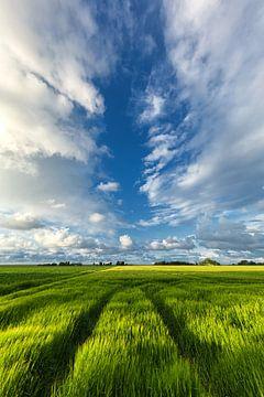 Sommerlicher Himmel über den Getreidefeldern in Groningen von Bas Meelker