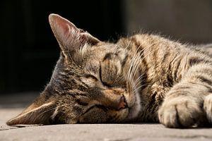 Schlafende streunende Katze