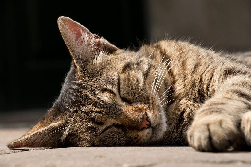 Schlafende streunende Katze von Aukelien Philips