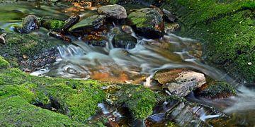 Moos-Steine-Wasser von Bettina Schnittert