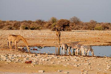 Trinkende Wildtiere an der Wasserstelle von Merijn Loch
