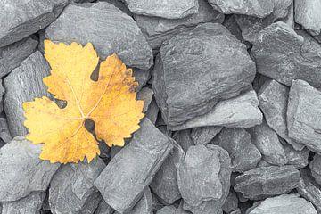 Een geel verkleurd herfstblad op grijze leistenen van Bas Meelker