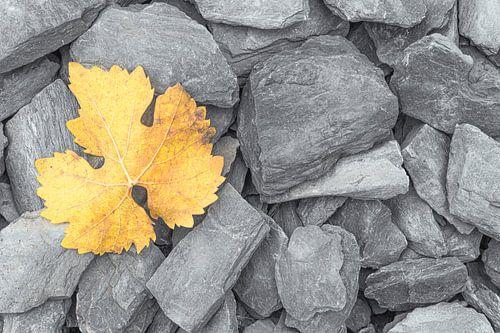 Een geel verkleurd herfstblad op grijze leistenen