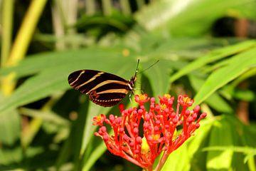 Papillon sur Kim de Groot