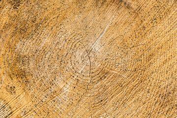 jaarringen, boom dwarsdoorsnede, kleurversie von Wim Demortier