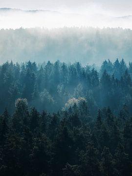 Schaduwen van het bos van Daniela Beyer