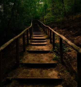 Die geheimnisvolle Treppe von Arno van der Poel