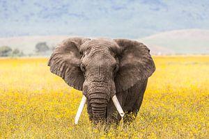 Ngorongoro Olifant in bloemenveld van Leon van der Velden