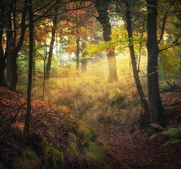 Licht in het bos van Tomas van der Weijden