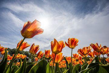 tulpen van Gert Slagmolen