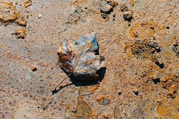Rusty Leaves VI van LYSVIK PHOTOS
