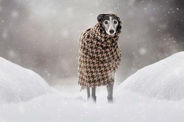 Alleen in de sneeuw van