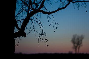 Boom silhouet bij zonsondergang von Evelyne Renske