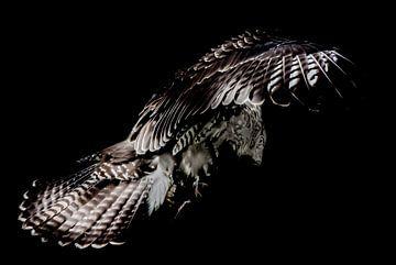 Oiseau de proie sur