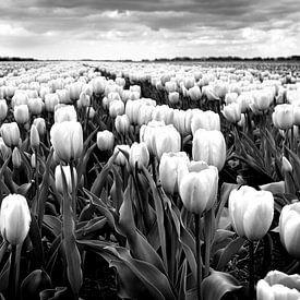 Polderlandschaft mit Tulpen (schwarz-weiß) von Rob Blok