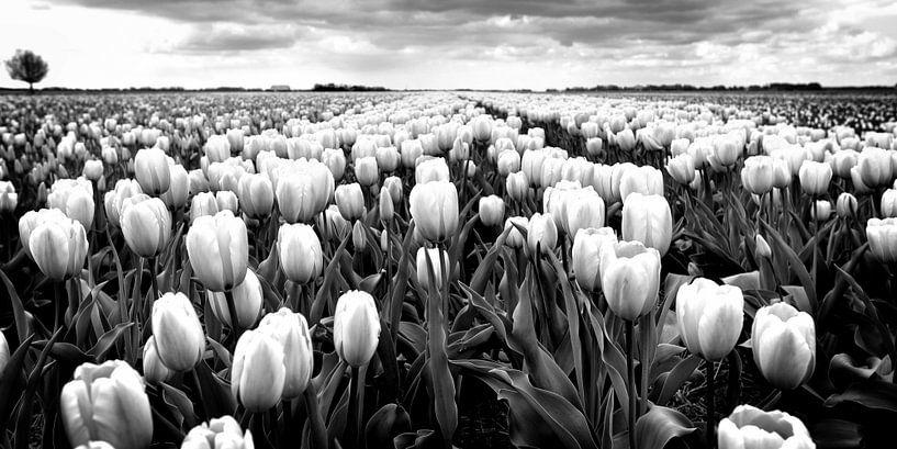 Polderlandschap met tulpen (zwart-wit) van Rob Blok