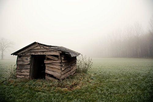 Misty World sur