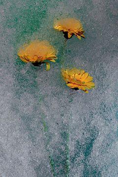Blume gefroren oder nicht 4 von Wim van Ooijen