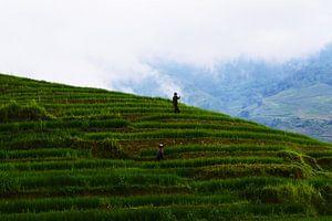 Rijstvelden in de bergen van Sapa van