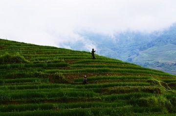 Rijstvelden in de bergen van Sapa von Zoe Vondenhoff