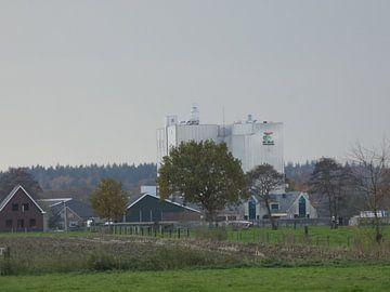 De valk Wekerom van Wilbert Van Veldhuizen