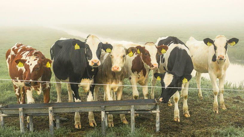 Koeien in de wei van Dirk van Egmond