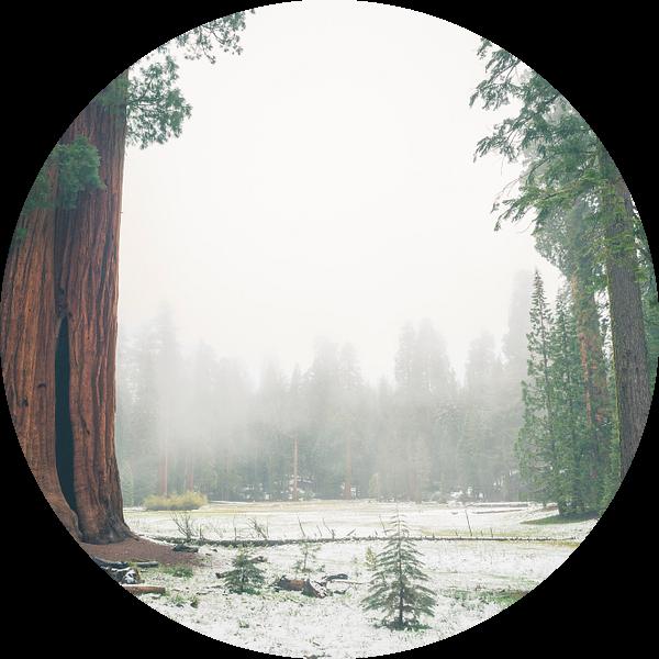 """Ed by Ned"" tree, Sequoia National Park sur Jasper van der Meij"
