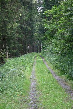 Bergweg van EnWout