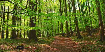 Maiwaldpanorama van Ostsee Bilder