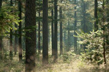 Morgendlicher Nebelwald von Nancy van Verseveld