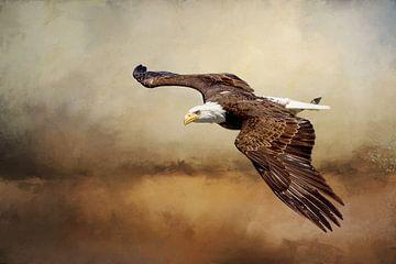 Amerikaanse Zeearend Boven Landschap Schilderij