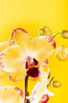 Gelbe Orchidee für Innenräume. von Iryna Melnyk